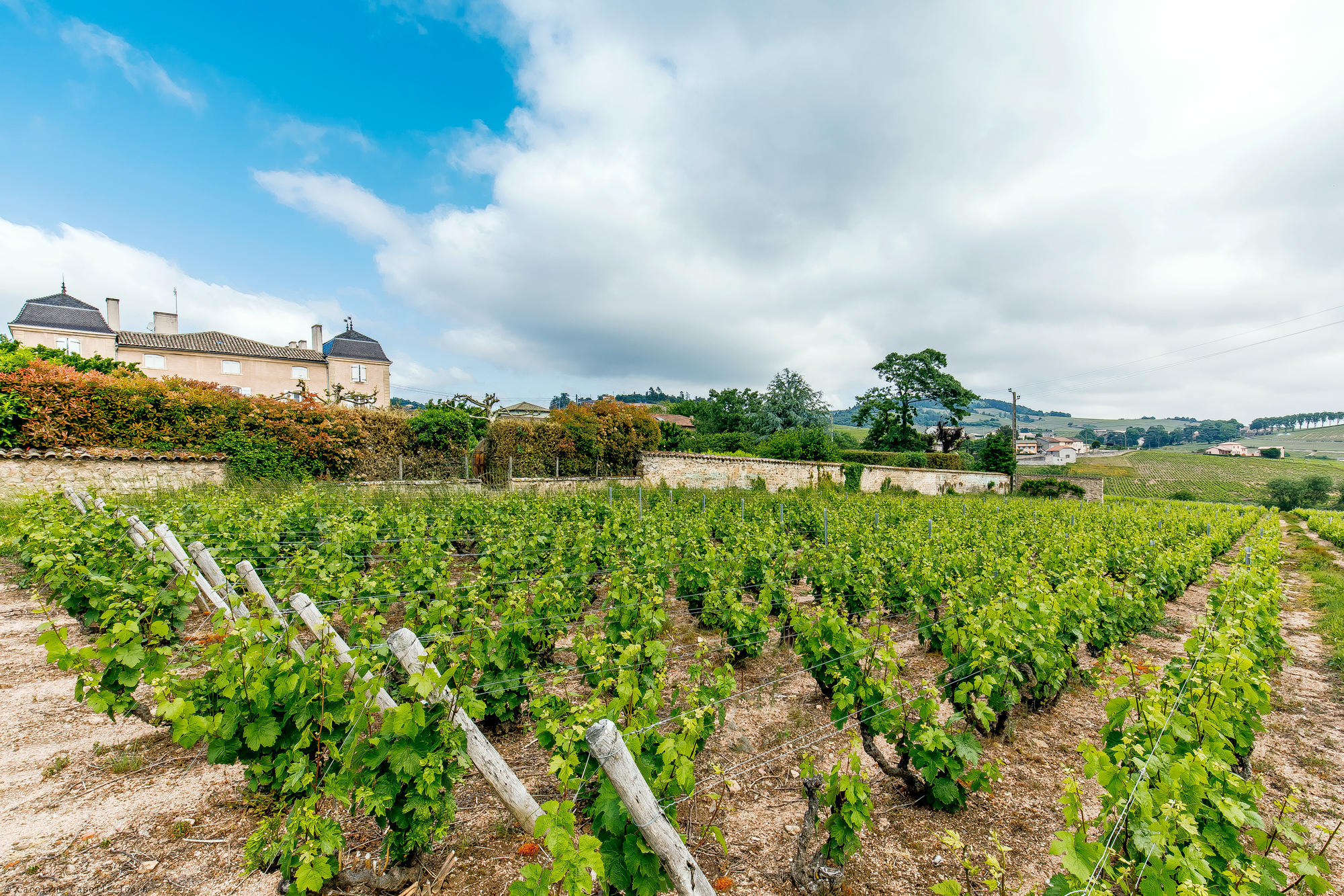 Property with a vineyard Beaujolais